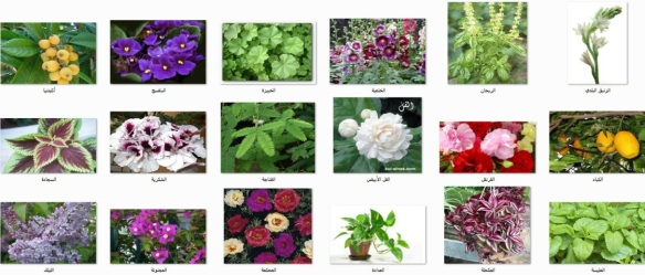 نباتات أرض الديار 1