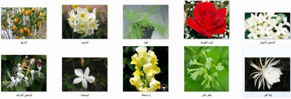 نباتات أرض الديار 2